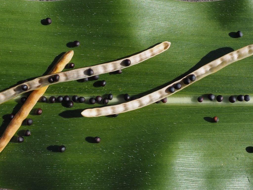 Todo lo que debes saber antes de sembrar colza
