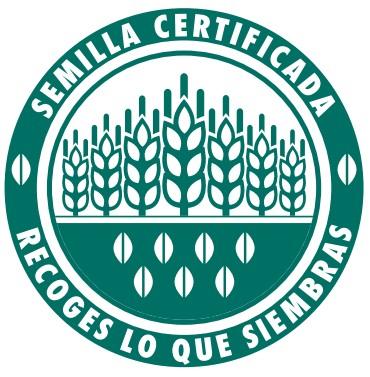 Semilla certificada
