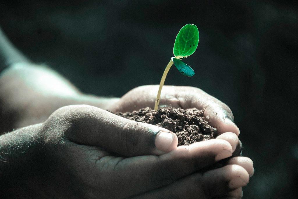 2020, Año Internacional de la Sanidad Vegetal