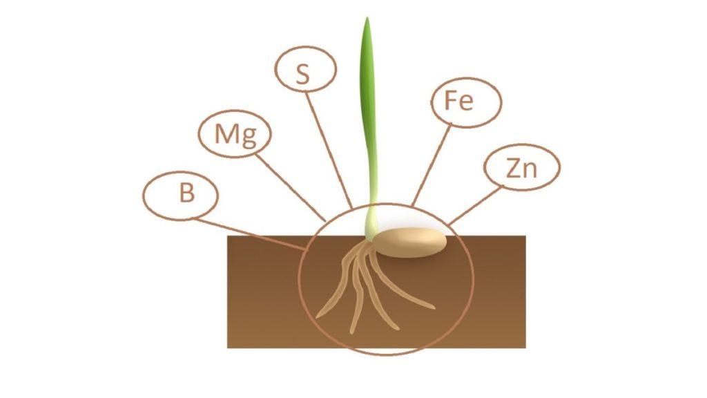 Nutrientes agrícolas