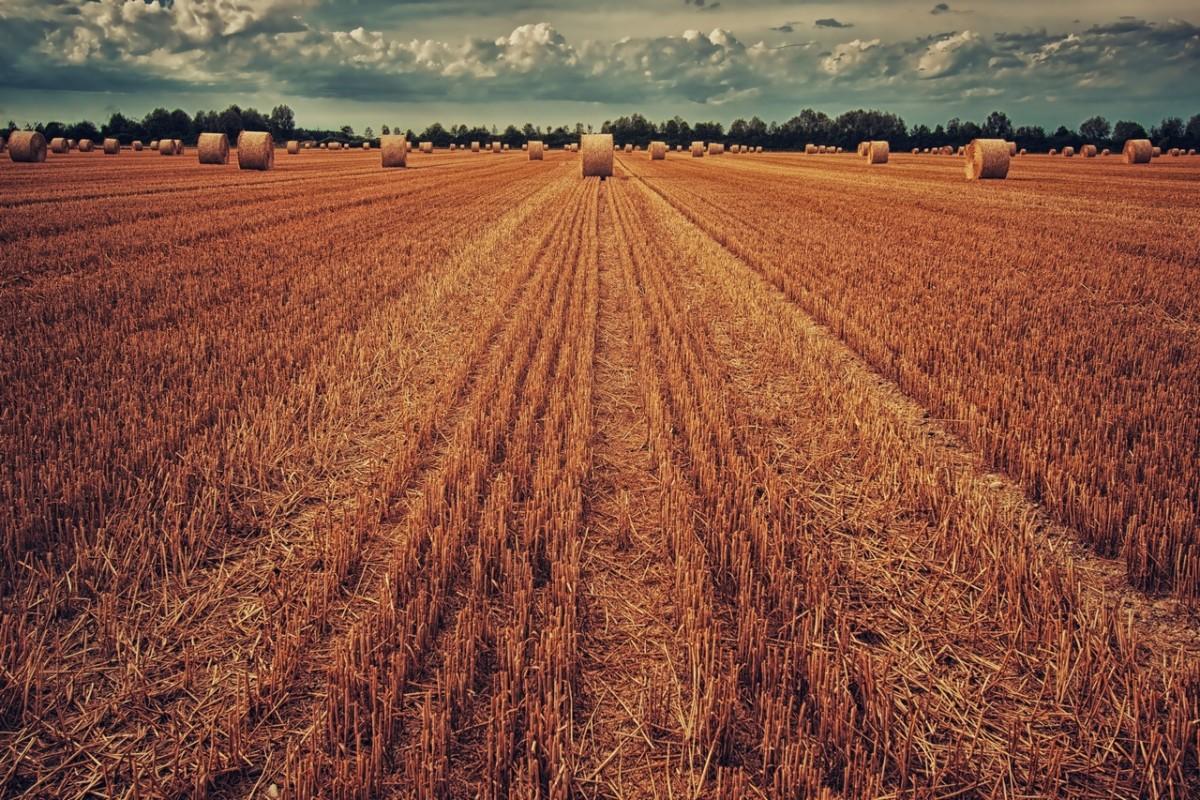 Compraventa de cereales en Huesca