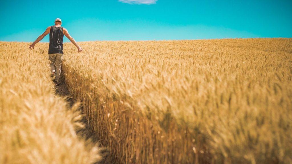 El ser humano puede ser un evaluador de cultivos excelente