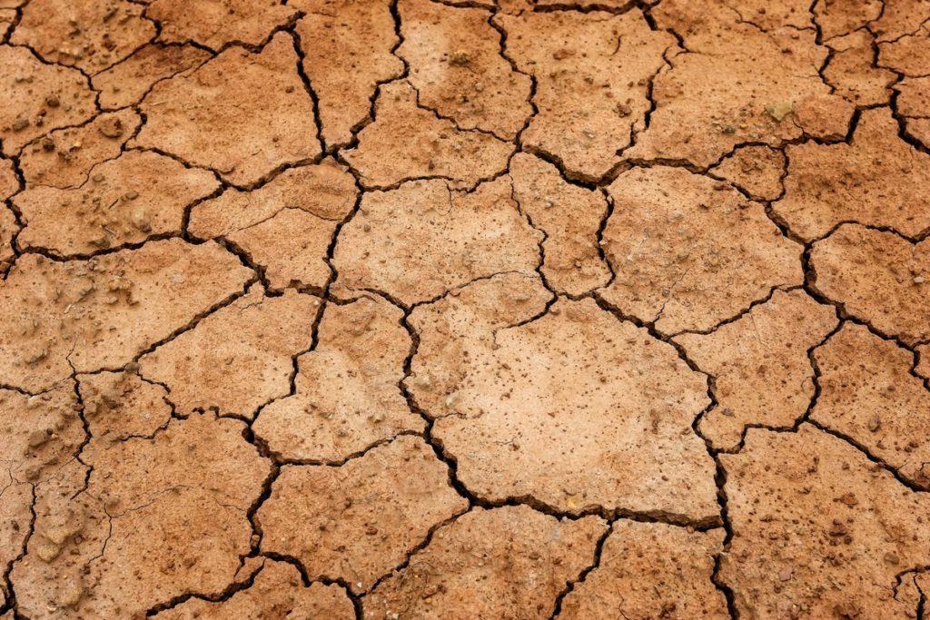 Una sequía histórica en Francia hunde la producción de cereales y los pastos