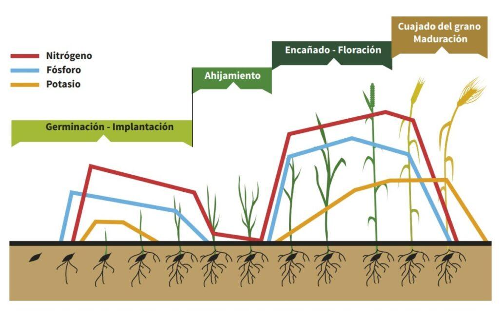 La importancia del abonado en el trigo